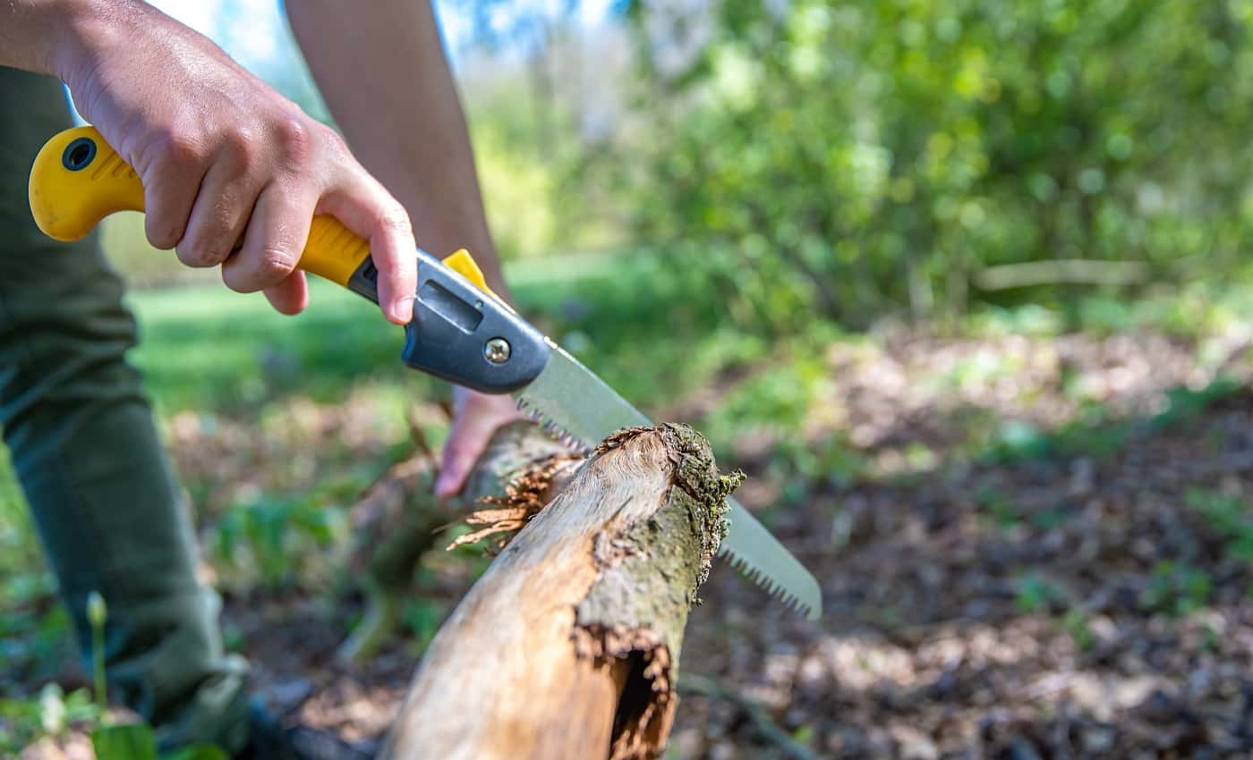 A man cuts a dry branch with a hand saw in the woods.