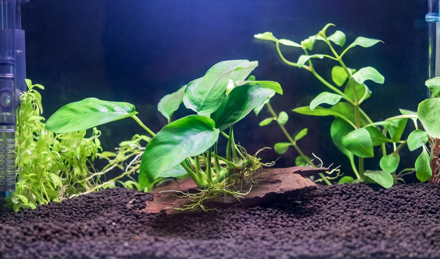 A green beautiful planted tropical freshwater aquarium without fish.