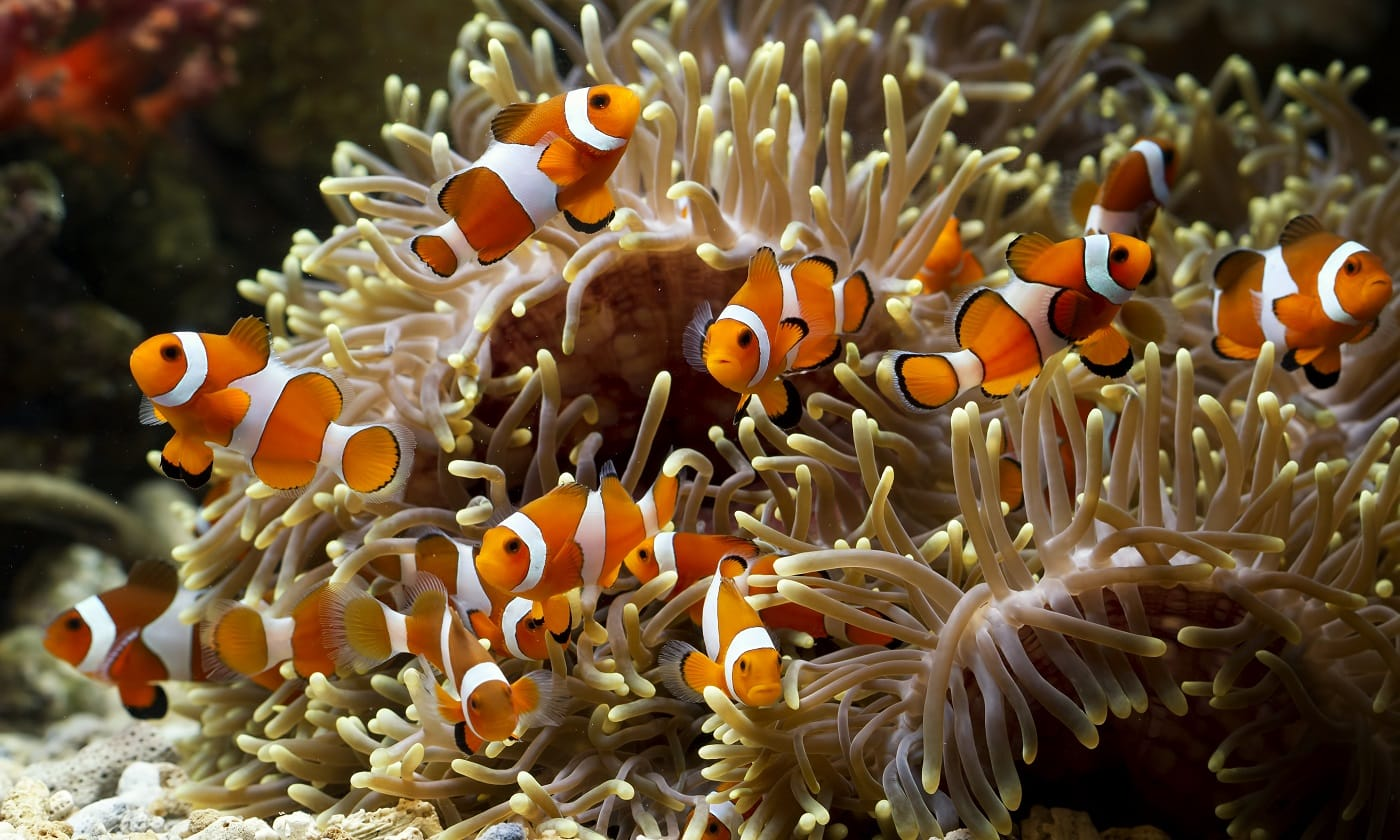 Popular Small Saltwater Fishes