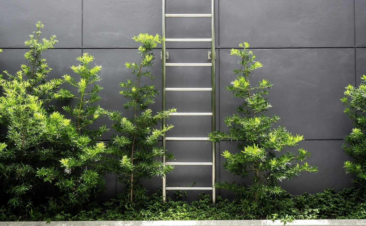 Steel ladder near the green leaves on grey wall building background.