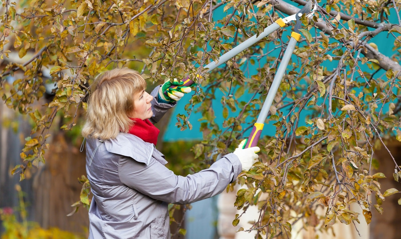 The woman harvests and flowers in the garden. Mature woman pruning a branch.