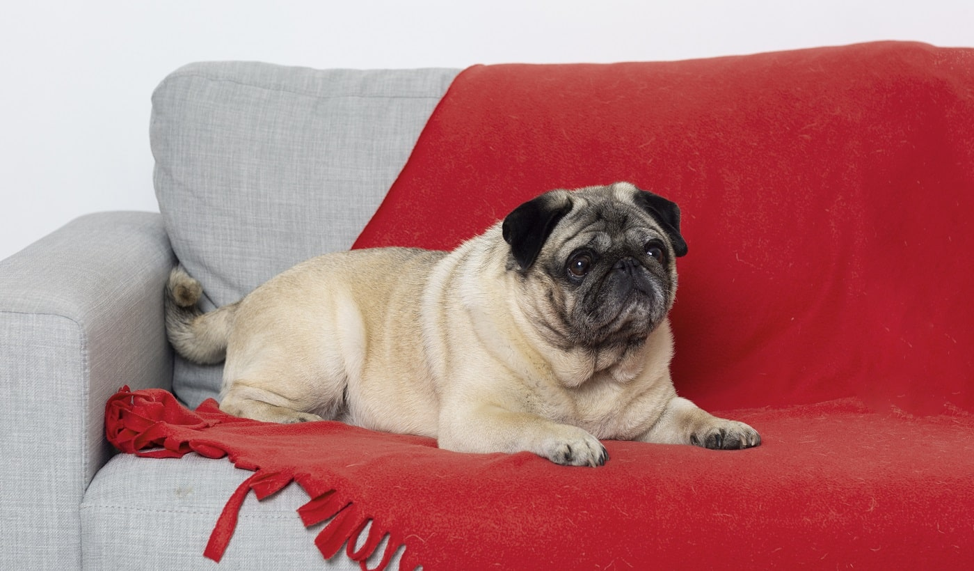 Best Couches for Dogs 02