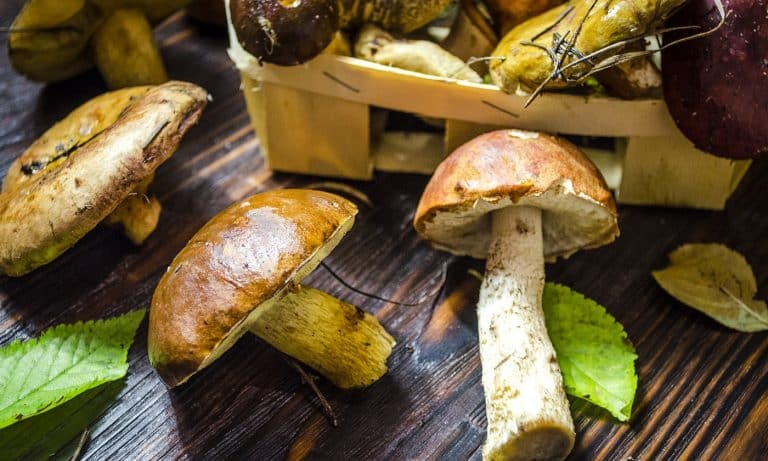different types of only collected wild mushrooms on the table